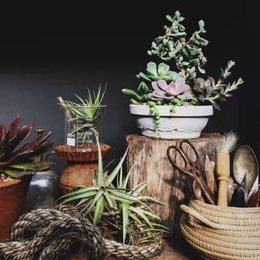 Suggerimenti per creare un angolo botanico in casa tua