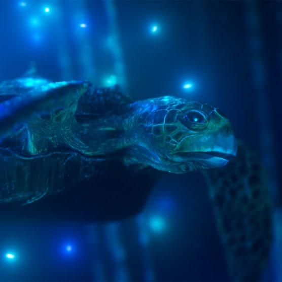Hybrid, un corto de animación para salvar los océanos