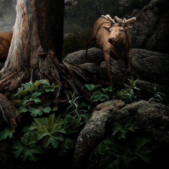 Nick Pedersen hace magia hiperrealista con Photoshop