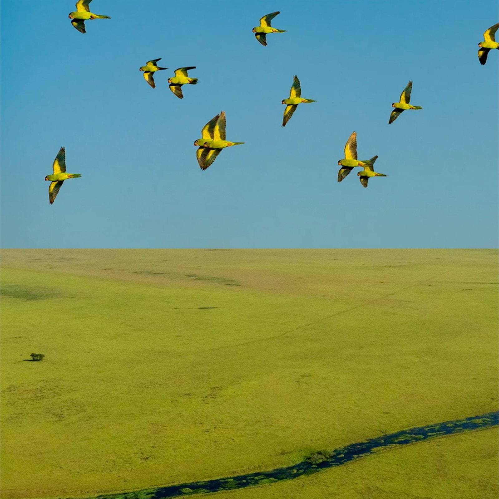 Descubra o Pantanal através do olhar de João Farkas