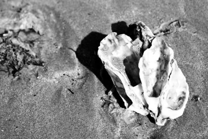 Día de playa 11