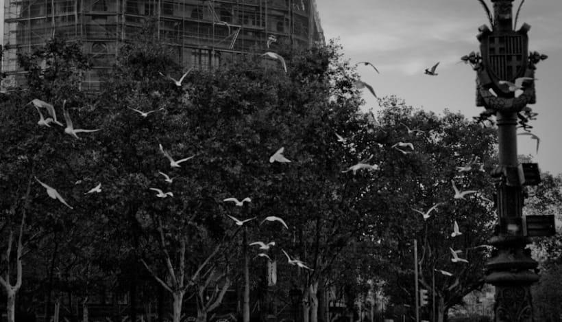 Pájaros | fotografía 8