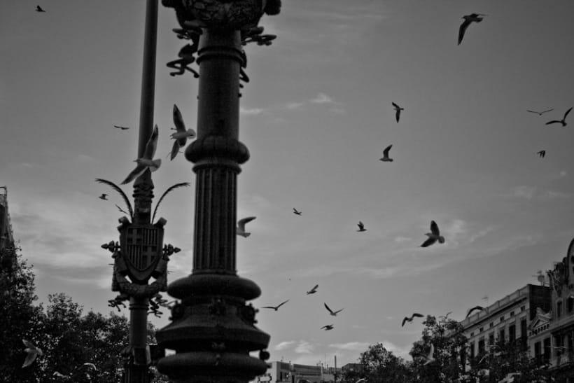 Pájaros | fotografía 7