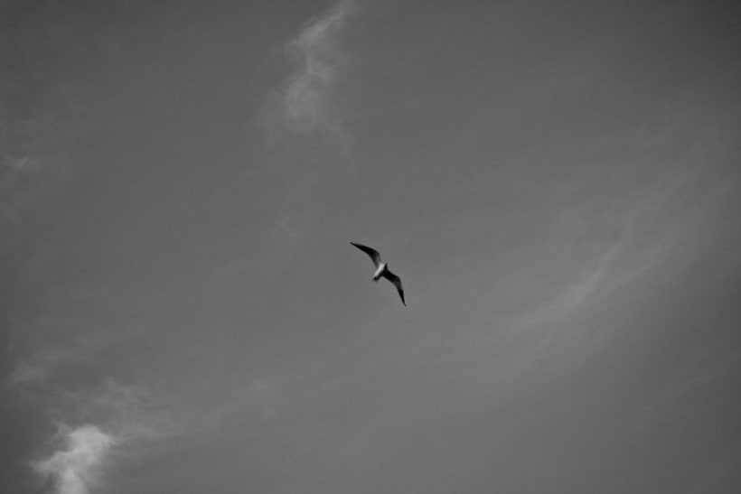 Pájaros | fotografía 6