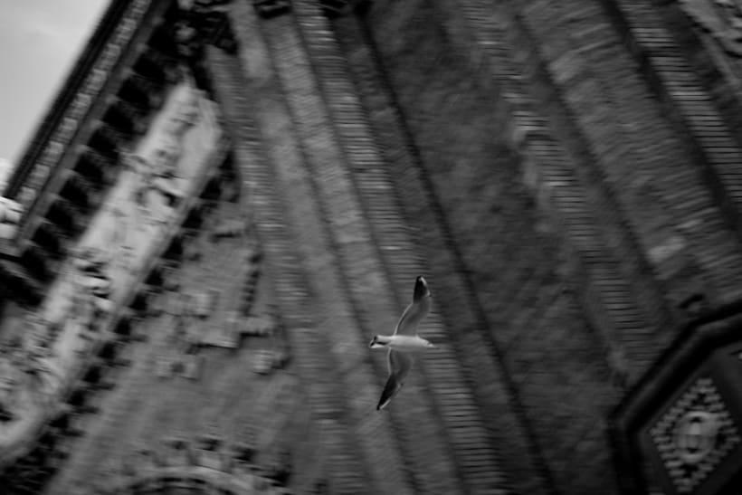 Pájaros | fotografía 5