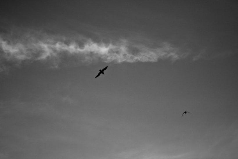 Pájaros | fotografía 4