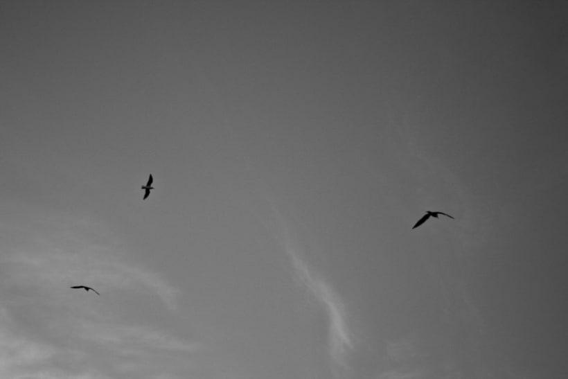 Pájaros | fotografía 3