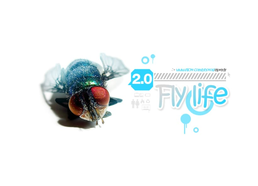 Fly Life 1