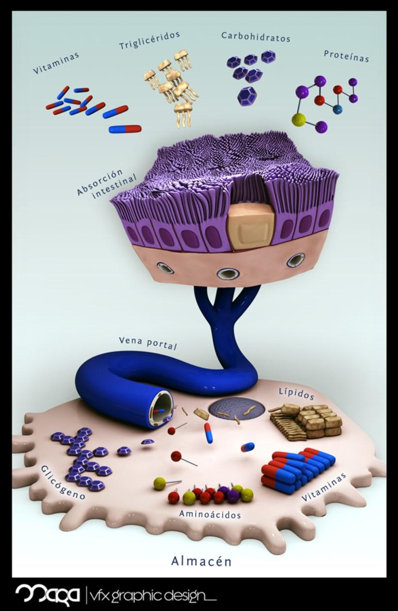 Ilustración Médica 2