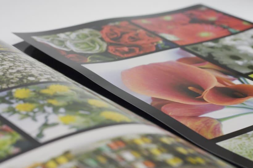 Triptico y fotografías empresa exportadora de flores 1
