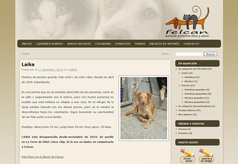 Felcan - Asociacion Protectora Felina y Canina 4