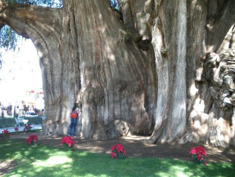 Besos de árbol 22