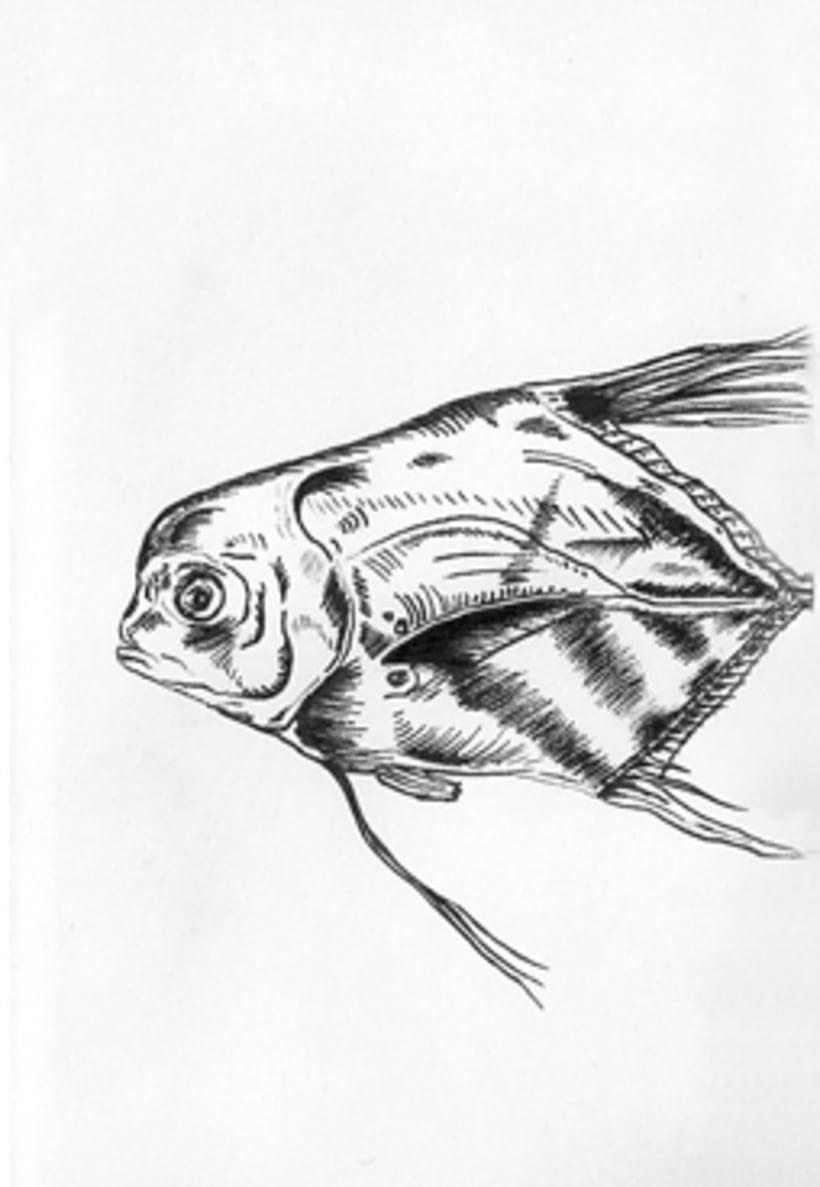 Fish & Chics 14