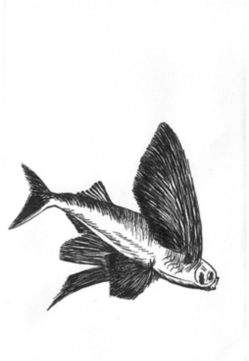 Fish & Chics 13
