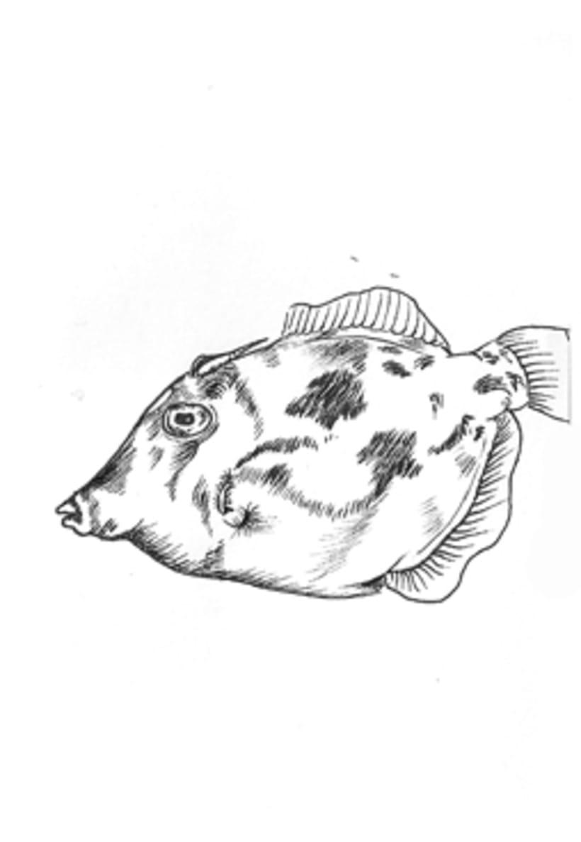 Fish & Chics 6