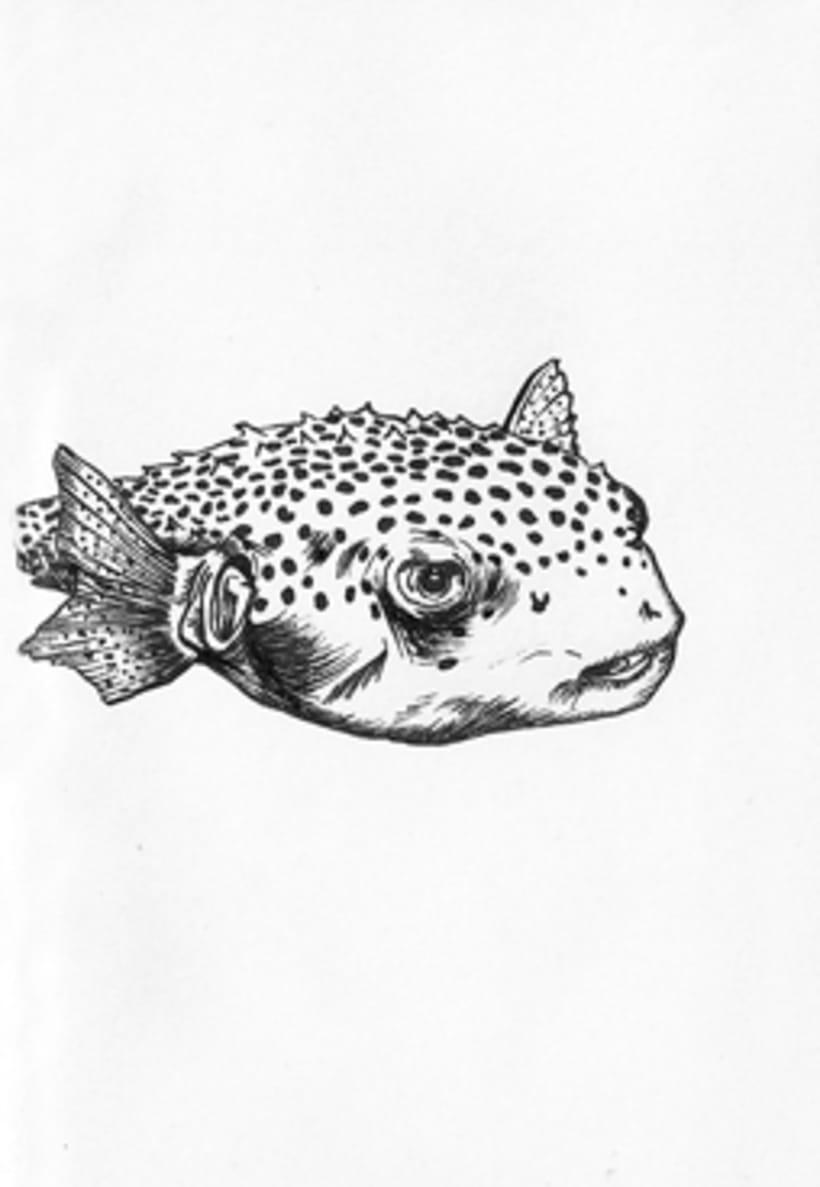 Fish & Chics 5