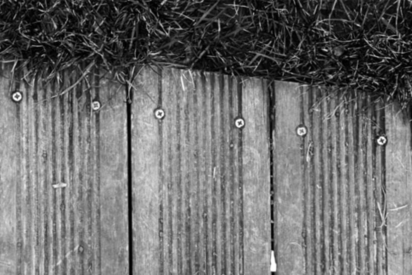 Murmullos FOTOGRAFIA 11