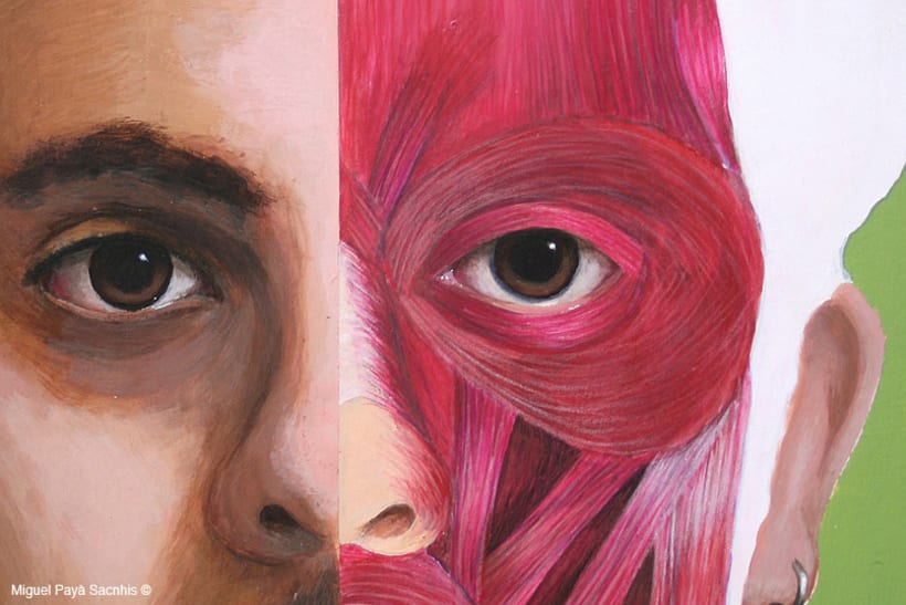 ilustración anatomía facial 4