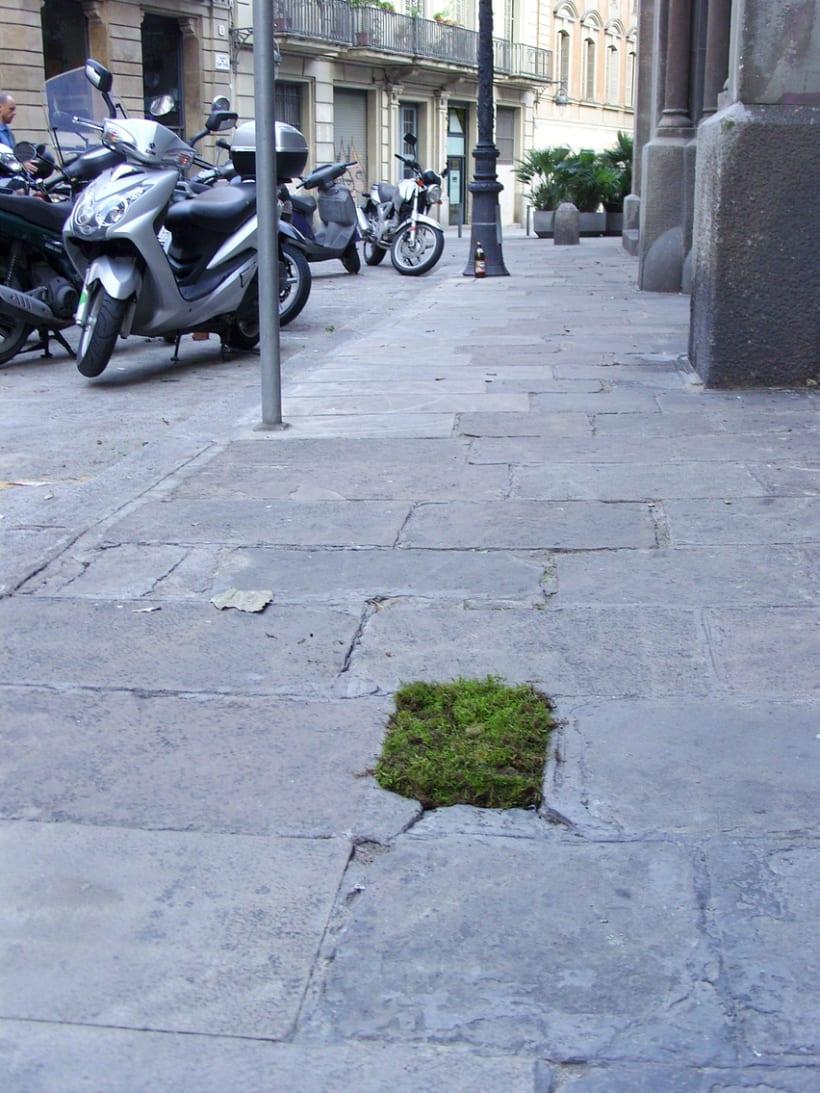 Moss Garden 9