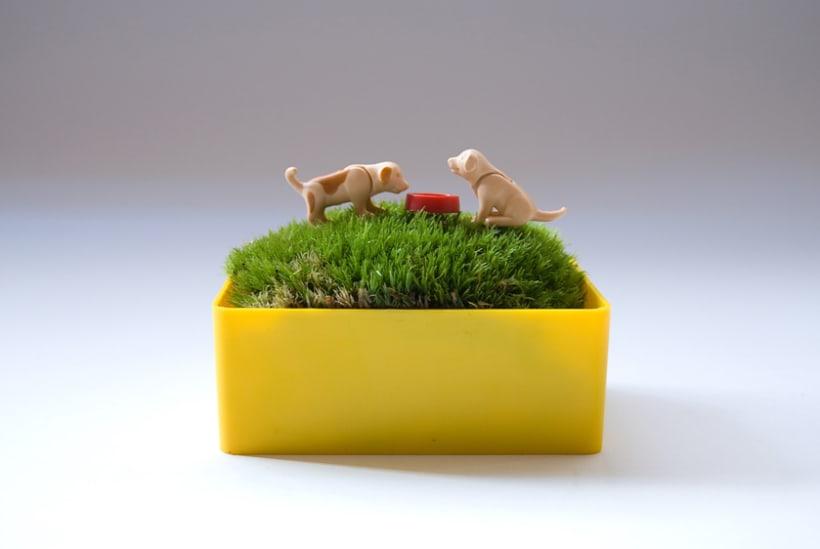 Moss Garden 7