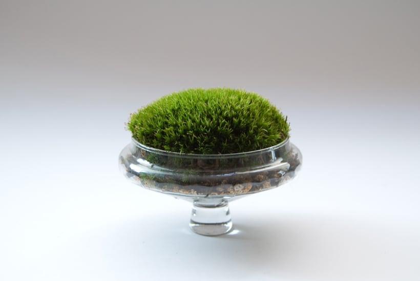 Moss Garden 6