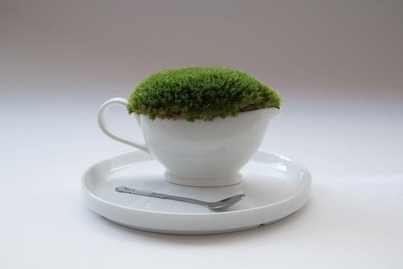 Moss Garden 4