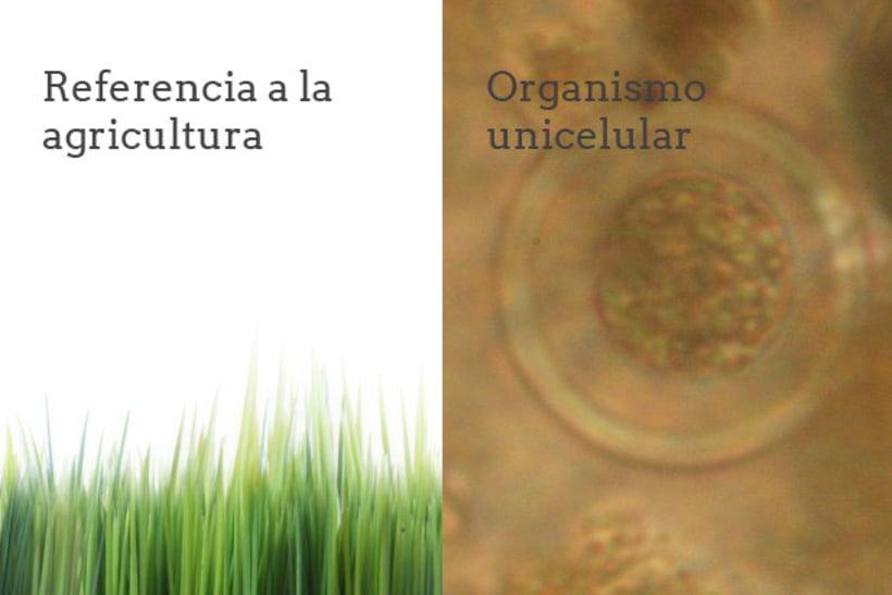 Identidad Corporativa - Redes Microbianas 3