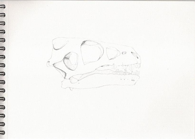 Ilustraciones a lápiz (1º Fase) 4