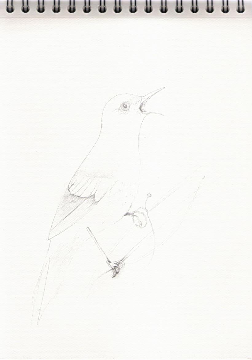 Ilustraciones a lápiz (1º Fase) 1