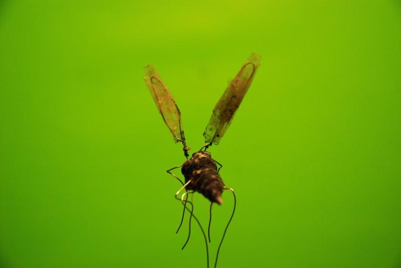 Stop Mosquito  4