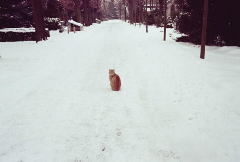 ¿Cómo un corazón de fuego sobrevive al frío de la nieve? 6