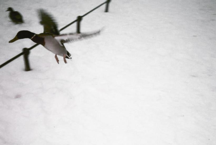 ¿Cómo un corazón de fuego sobrevive al frío de la nieve? 3