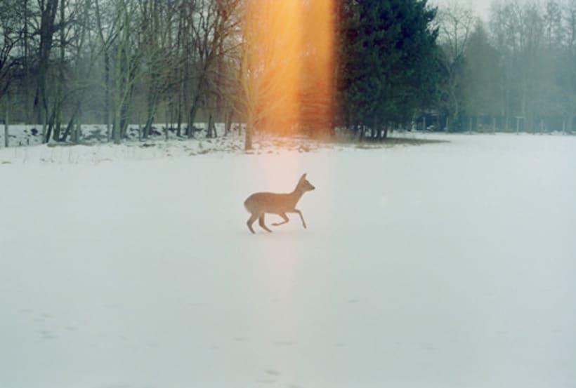 ¿Cómo un corazón de fuego sobrevive al frío de la nieve? 2