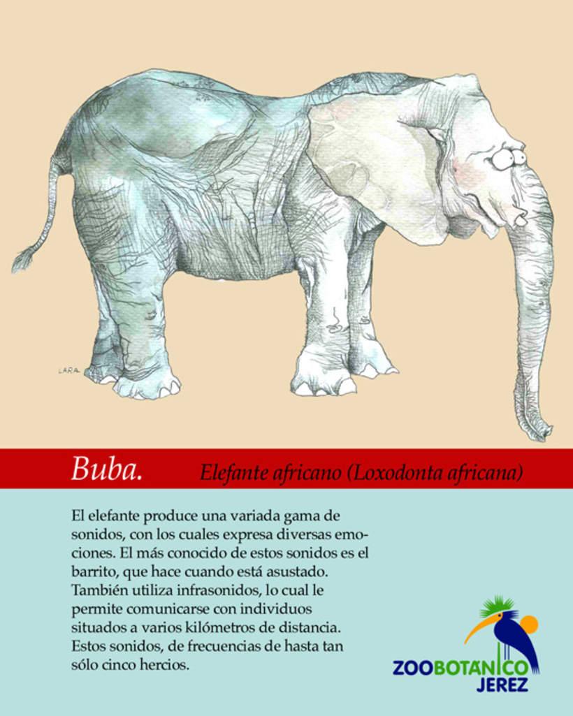 Ilustración animales del Zoo (Jerez) 22