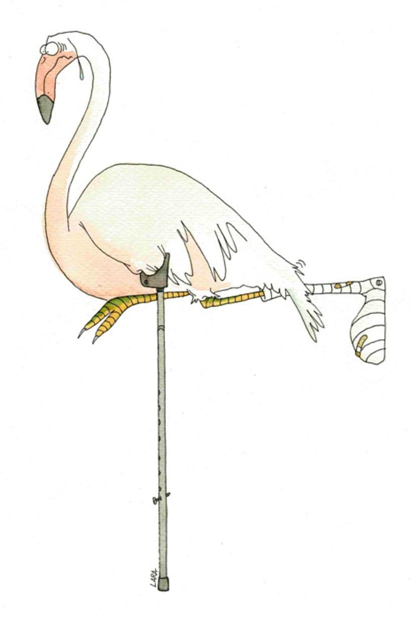 Ilustración animales del Zoo (Jerez) 17