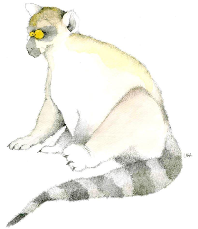 Ilustración animales del Zoo (Jerez) 11