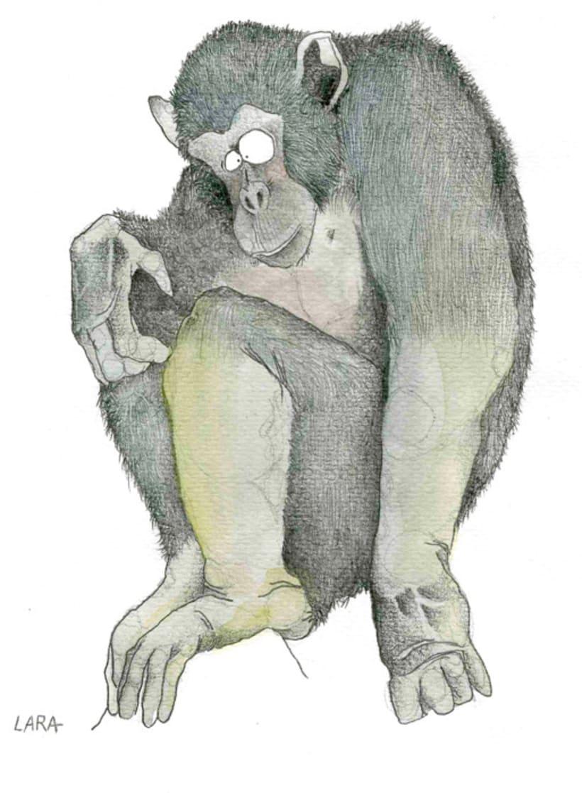 Ilustración animales del Zoo (Jerez) 9