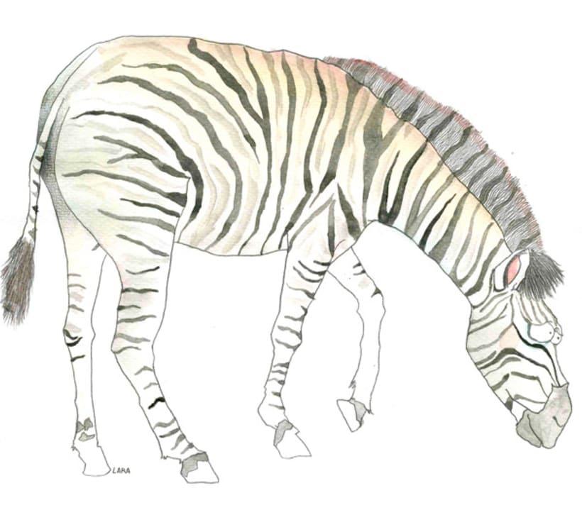 Ilustración animales del Zoo (Jerez) 4