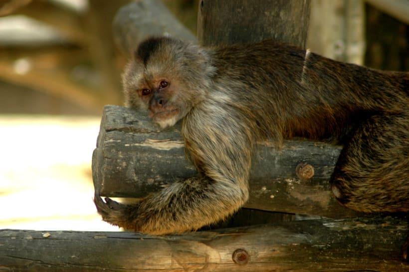 Fotografía (Zoo Jerez) 10