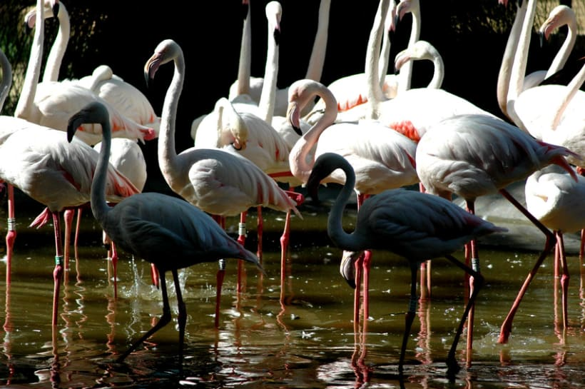 Fotografía (Zoo Jerez) 9