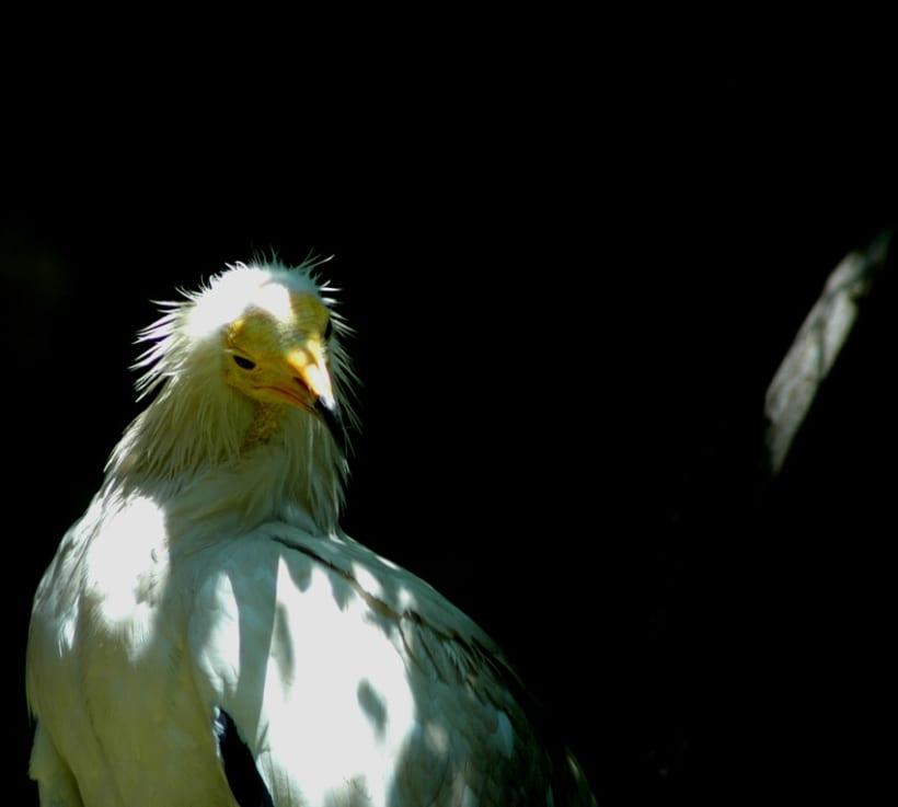 Fotografía (Zoo Jerez) 7