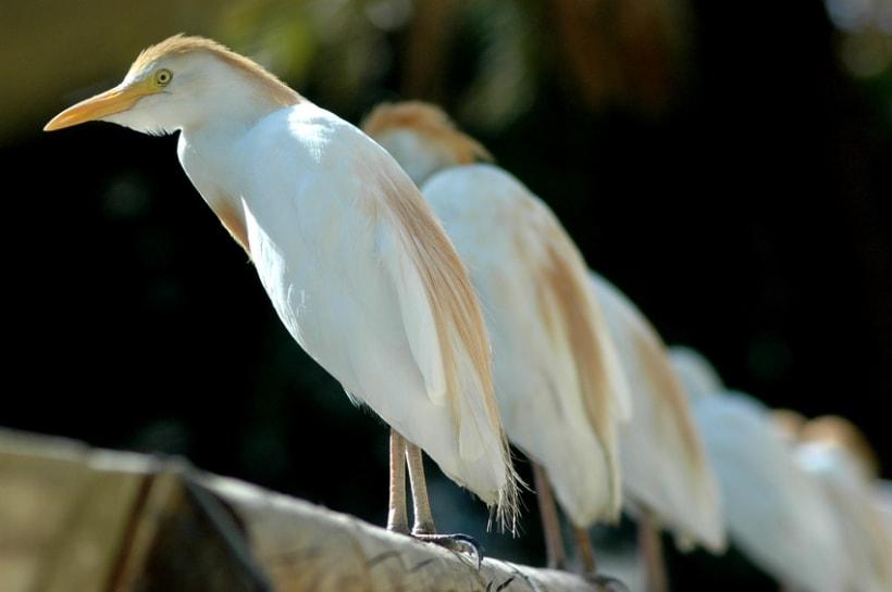 Fotografía (Zoo Jerez) 3