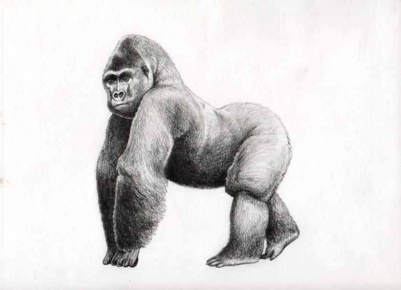 Ilustración científica 2