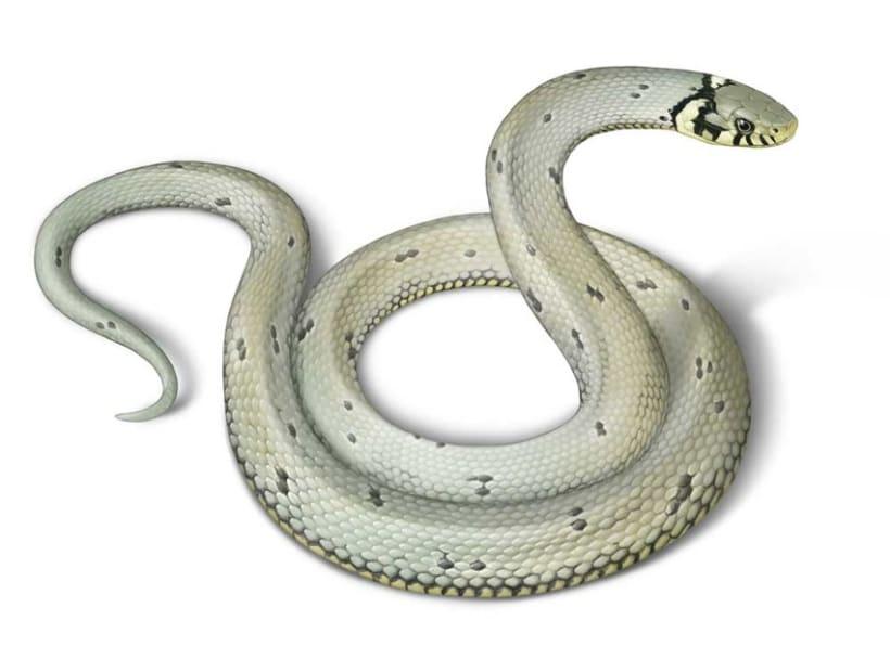Ilustraciones Reptiles 5