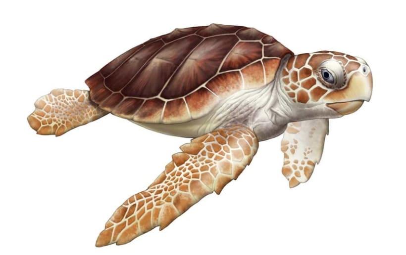 Ilustraciones Reptiles 4