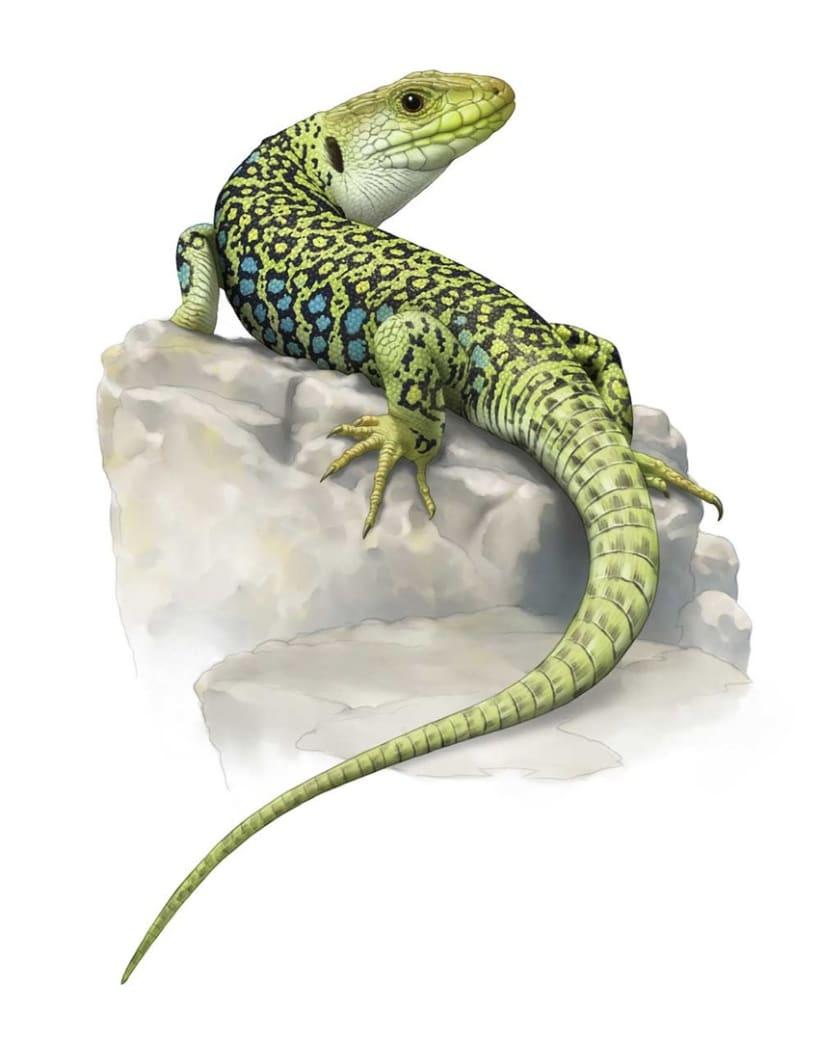 Ilustraciones Reptiles 3