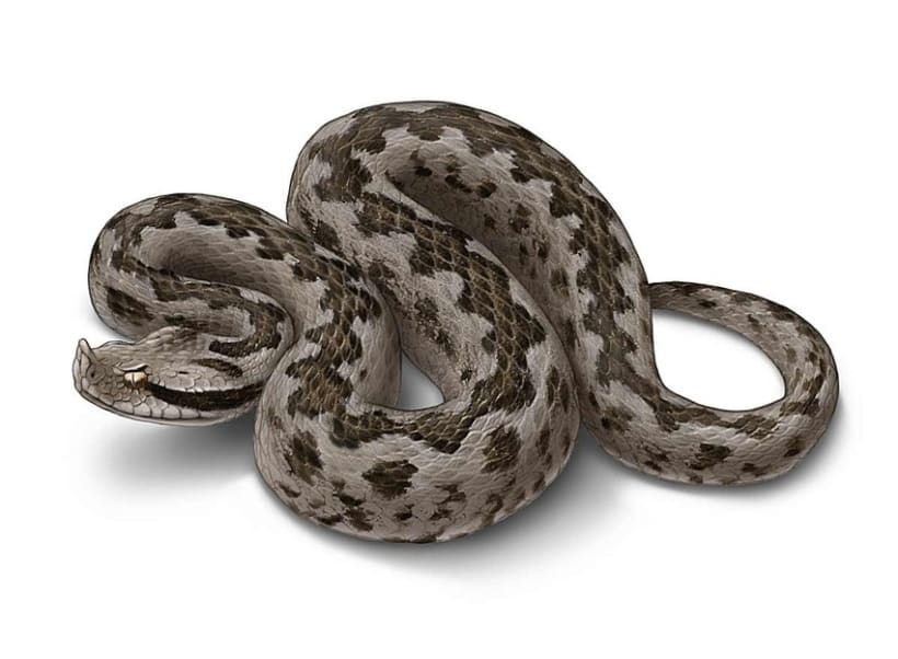 Ilustraciones Reptiles 2