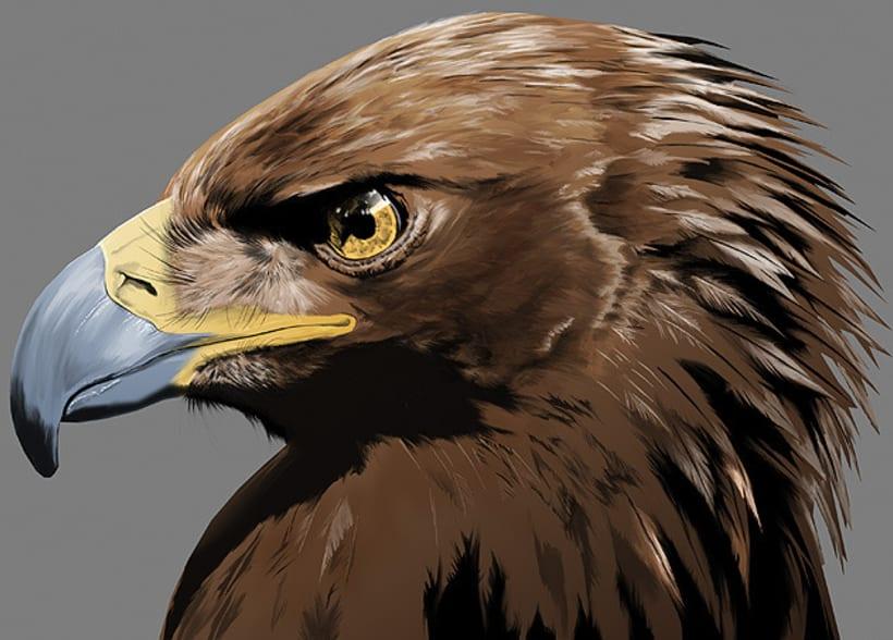 Aquila adalberti 1