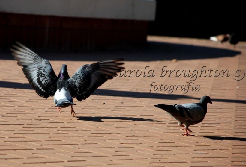 Aves 14