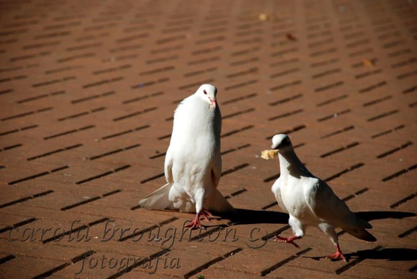 Aves 13